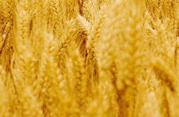 芒种三候分别是哪三候?芒种对农事有什么影响